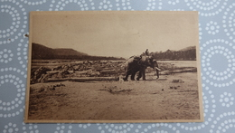 LAOS _ ELEPHANT  …………13 - 25 KZ - Laos