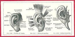 Pavillon De L'oreille, Muscles Du Pavillon, Artères Du Pavillon, Larousse Médical De 1934 - Vieux Papiers