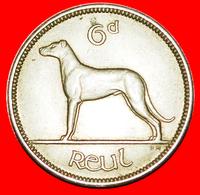 # IRISH WOLFHOUND: IRELAND ★ 6 PENCE 1955 EXCELLENT CONDITION! LOW START ★ NO RESERVE! - Irlanda