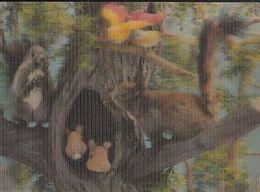 ANIMALS, SQUIRREL, SCRUB, NEST, BIRDS, 3D - Animals