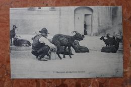 CHEVRIER ET CHEVRES CORSES (CORSE) - France