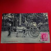 A LIGHT BULLOCK CART - Myanmar (Burma)
