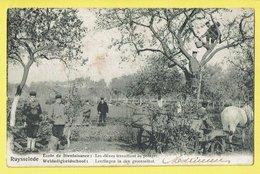 * Ruiselede - Ruysselede * école De Bienfaisance, Weldadigheids School, élèves Travaillant Au Potager, Enfants, Jardin - Ruiselede