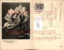 464940,Blumen Rose Rosenblüte Namenstag - Botanik
