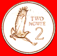 # GREAT BRITAIN: ZAMBIA ★ 2 NGWEE 1983 MINT LUSTER! LOW START ★ NO RESERVE! Kenneth Kaunda (1964-1991) - Zambie