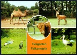 B4679 - Tiergarten Falkenstein - Tierpark Zoologischer Garten Dresden - Zoo Tierpark - Tierwelt & Fauna