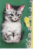 Cat, Chat, Katze, Gatto, Gato, Kat, Unused - Chats