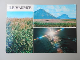 MAURICE ILE MAURICE  MAURITIUS LES FLEURS DE CANNE A SUCRE - Maurice