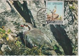 Carte Maximum 1969 Perdrix Yvert 575 - Jordanie