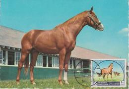 Carte Maximum 1969 Chevaux Yvert 583 - Jordanie