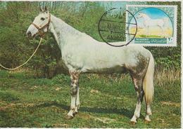 Carte Maximum 1969 Chevaux Yvert 584 - Jordanie