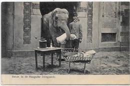 CPA éléphant ELEPHANT Non Circulé ZOO The Age Moulin à Café - Elephants