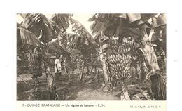 CPA AFRIQUE A.O.F. Guinée Française Un Régime De Bananes - Guinea
