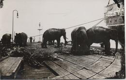 ASIE  BELLE CARTE A SITUER  VOIR LES SCANS  ELEPHANTS SUR LE QUAI D'UN PORT  TIRANT UN BATEAU - Cartes Postales
