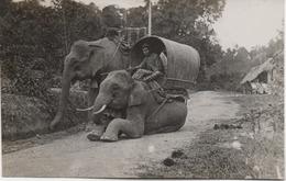 ASIE  BELLE CARTE A SITUER  VOIR LES SCANS   DEUX ELEPHANTS - Cartes Postales