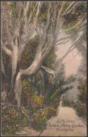 Eucalyptus, Tresco Abbey Gardens, Scilly Isles, 1913 - Frith's Postcard - Scilly Isles