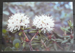 GEENLAND Flower 27/90 Jon Feilberg - Greenland