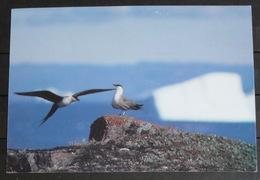 GEENLAND Birds 25/90 Frank Wille - Greenland
