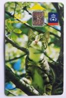 Cat In A Tree, Sweden - Sweden