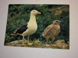 Refboite202 * Reserve Naturelle  Société Nature Bretagne Goeland  ( Editions Editeur Jean Audierne Pas De N°  ) - Oiseaux