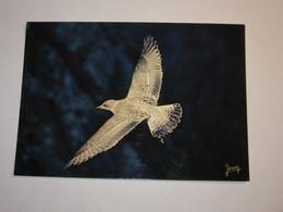 Refboite202 * Reserve Naturelle  Société Nature Bretagne Goeland Argenté ( Editions Editeur Jean Audierne Pas De N°  ) - Birds
