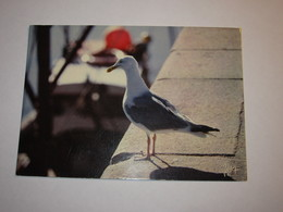 Refboite202 * Goeland Argenté  Oiseau   ( Editions Editeur Jean Audierne N° 24153  ) - Birds