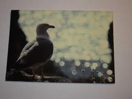Refboite202 * Goeland Argenté  Oiseau   ( Editions Editeur Jean Audierne N° 24152  ) - Birds