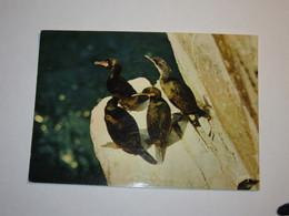 Refboite202 * Reserve Naturelle Société Bretonne Cormorans Huppés  ( Editions Editeur Jean Audierne N° 23 088  ) - Birds