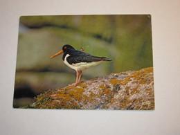 Refboite202 * Reserve Naturelle Société Bretonne Huitrier Pie Trace Rouge  ( Editions Editeur Jean Audierne Pas De N°  ) - Birds