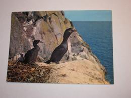 Refboite202 * Reserve Naturelle Société Bretonne Cormorans Huppé  ( Editions Editeur Jean Audierne Pas De N°  ) - Oiseaux