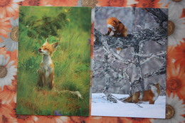 3 PCs Lot - Russia. Kronotsky Nature Reserve. Fox Cub - Modern Russian Postcard - - Animaux & Faune