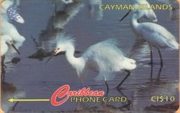 Cayman Island - CAY-13C, GPT, 13CCIC, Snowy Egret, Birds, 10 $, 25.000ex, 1995, Used - Cayman Islands