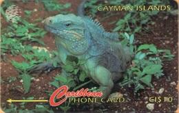 Cayman Island - CAY-13B, GPT, 13CCIB, Cayman Iguana, 10 $, 25.000ex, 1995, Used - Cayman Islands