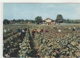 """Vendanges -Corgoloin - Domaine Du Clos Des Langres - """" Reine Pédauque """"  - 105x150 Dentelée, Glacée - Altri Comuni"""