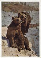 34896 Russia, Circuled Stationery Card 1964 Showing 2 Bears, 2 Ours, 2 Baren - Bären