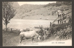 Carte P ( Suisse / Les Vaches ) - Cows