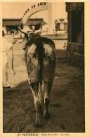 150618A - CAMEROUN Cie Pastorale - Boeuf De 4 Ans 1/2 Sang - Bovin Animal - Cameroun