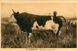 150618A - CAMEROUN Cie Pastorale - Taureau 3/4 Sang 4 Ans - Bovin Animal - Cameroun