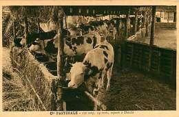 150618A - CAMEROUN Cie Pastorale - 1/2 Sang 14 Mois Exposés à DOUALA - Bovin Animal - Cameroun
