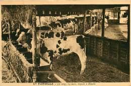 150618A - CAMEROUN Cie Pastorale - 1/2 Sang 14 Mois Exposés à DOUALA - Bovin Animal - Cameroon