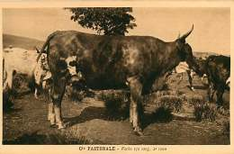 150618A - CAMEROUN Cie Pastorale - Vache 1/2 Sang 2e Veau - Bovin Animal - Cameroun