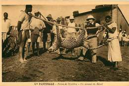 150618A - CAMEROUN Cie Pastorale - Ferme De DJUTTITSA Un Ennemi Du Bétail - Animal Léopard  Chasse - Cameroun