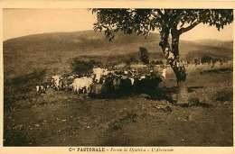 150618A - CAMEROUN Cie Pastorale - Ferme De DJUTTITSA L'abreuvoir - Cameroun