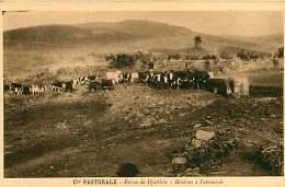150618A - CAMEROUN Cie Pastorale - Ferme De DJUTTITSA Génisses à L'abreuvoir - Cameroun