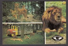 43152/ BELLEWAERDE SAFARI, Lions, Le Petit Train - Ieper