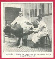 Récolte Du Vaccin Pour La Vaccination Directe, Procédé Chambon, Larousse Médical 1929 - Other