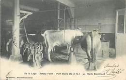 D-18-573 : ILE LA LOGE. JERSEY-FARM. PORT-MARLY. LA TRAITE DES VACHES A L'ELECTRICITE. LAIT. LAITERIE. - Breeding