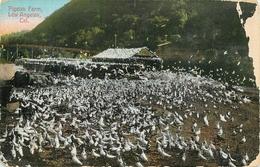 PIGEON FARM LOS ANGELES CARTE NON POSTALE DOS TOTALEMENT VIERGE - Vögel