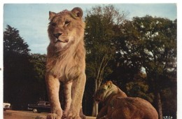 CPM - PARC ZOO DE THOIRY - LIONS - Edition Du Château - Lions