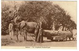 Gabon - Un éléphant Domestiqué - 2 Scans - Gabon
